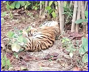 प्रदेश में वन्यजीवों के शिकार की बढ़ी हैं घटनाएं . . .