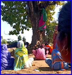 सिवनी में भी पूजा जाने लगा महुआ का पेड़!