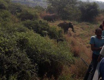 सिवनी से निकलकर जबलपुर पहुंचे हाथियों ने माचाया उत्पात