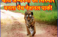 बाघ अभ्यरणों का सिरमौर बनता पेंच नेशनल पार्क!
