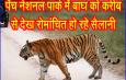 पेंच नेशनल पार्क में बाघ को करीब से देख रोमांचित हो रहे सैलानी
