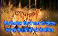 पेंच नेशनल पेंच में बाघ के दीदार कर रहे सैलानियों को रोमांचित